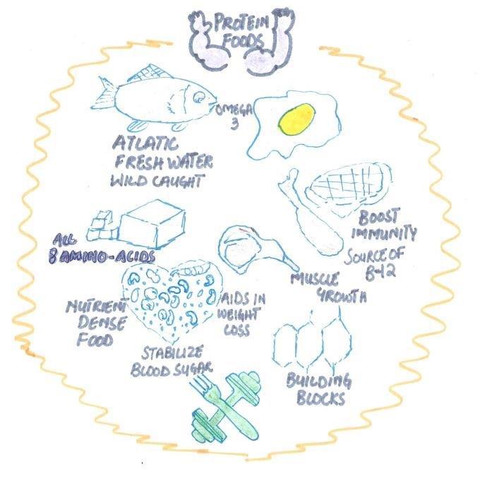 Protien foods